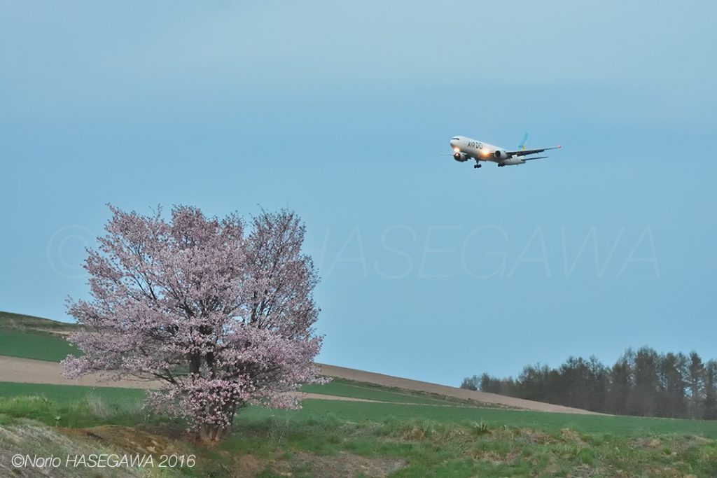 Sakura and the A321, in the sky approaching dusk.